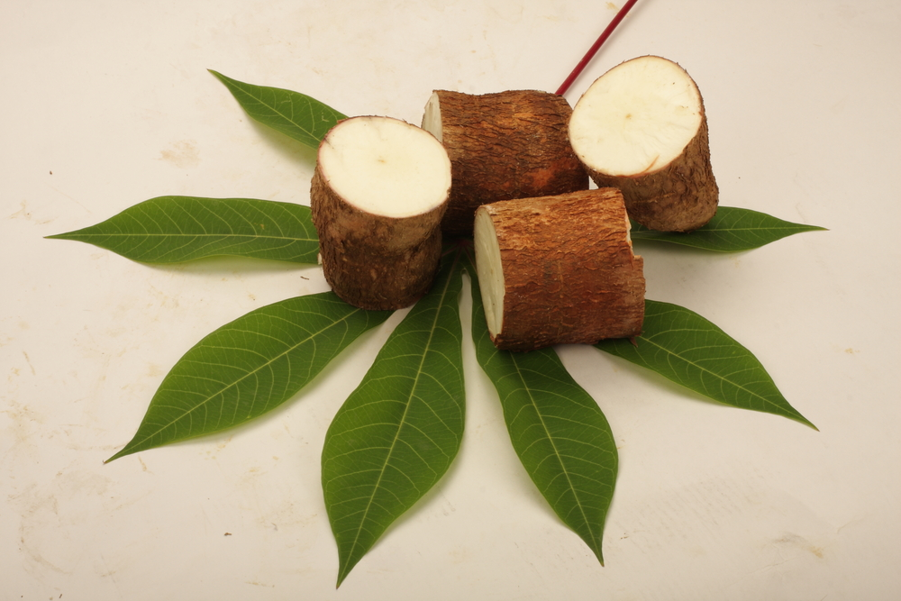 Cassava Leaves, Roots Show Promise Against Colon Cancer