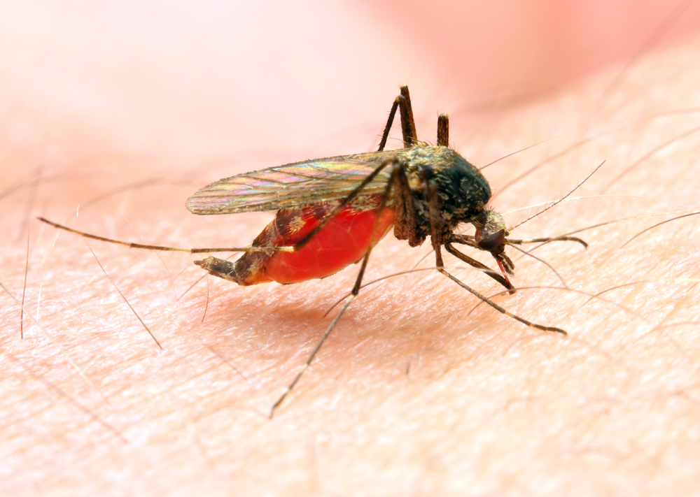 Study Finds Malaria Drug Could Aid In Colorectal Cancer Treatment