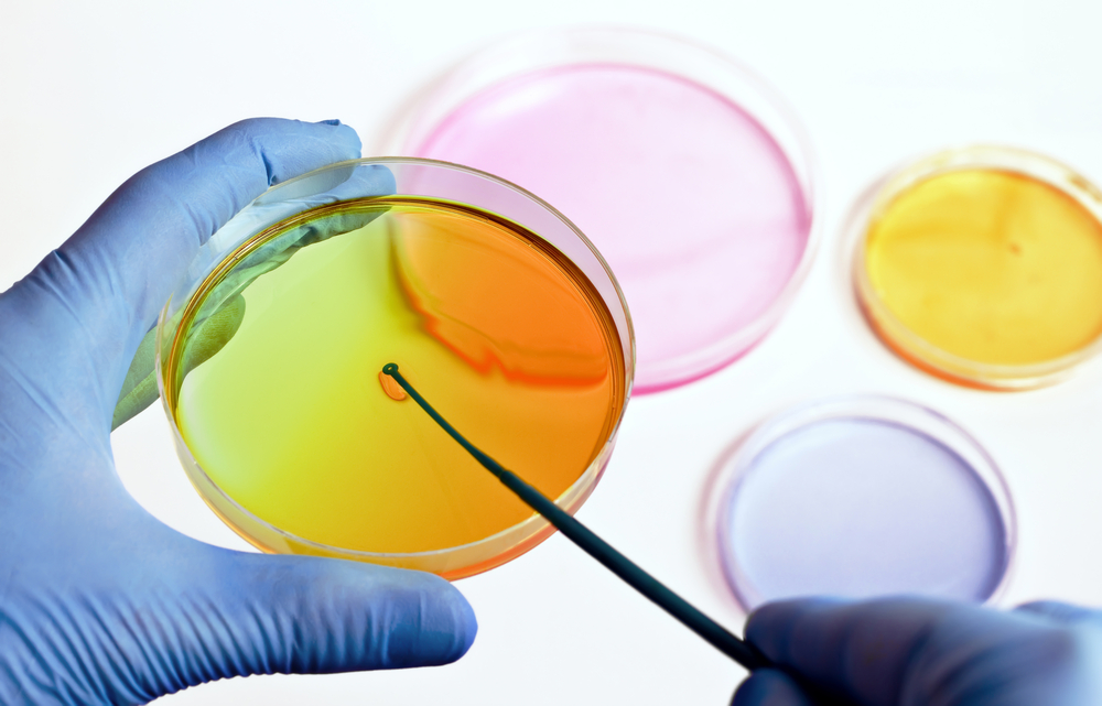 """Researchers Design Innovative """"Tumor in a Dish"""" To Test Anti-Cancer Drugs"""
